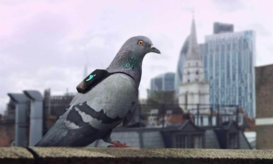 London's pigeon-powered pollution patrol