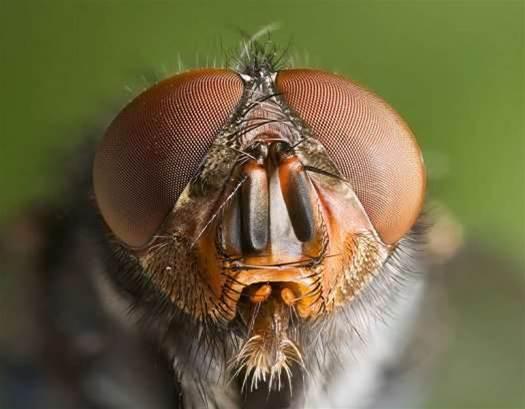 Bug-Like Robotic Drones Becoming More Bug-Like, With Bulging Eyes and Tiny, Sensing Hairs