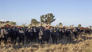 Local start-up aiding graziers manage variable conditions