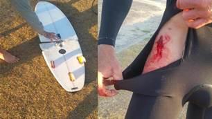 Shark Attack at Iluka