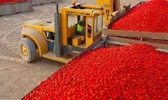 Kagome brings IoT to Victorian tomato farms
