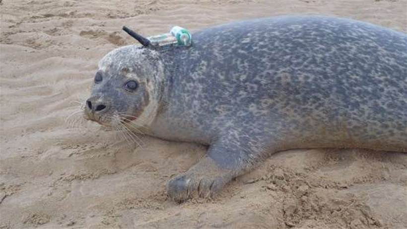 Vodafone to power the Internet of seals