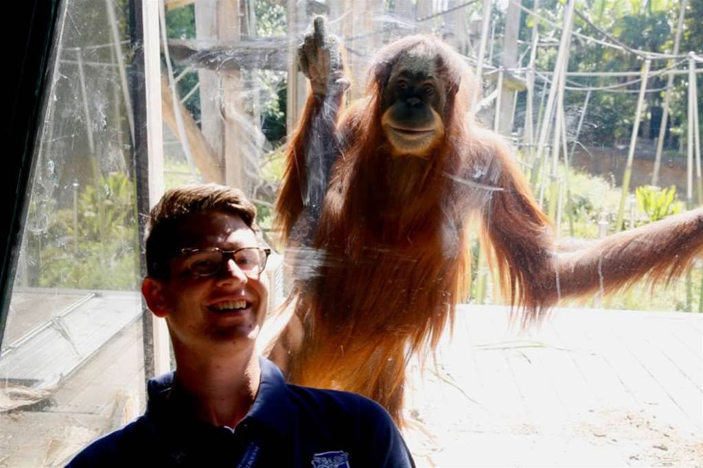Melbourne Zoo's Orang-utans get access to Kinect-powered apps and games