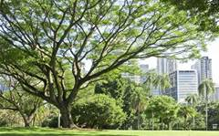 Free Wi-Fi on your lunchbreak: Brisbane parks