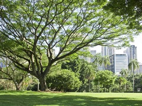 Free Wi-Fi on your lunchbreak: Brisbane parks