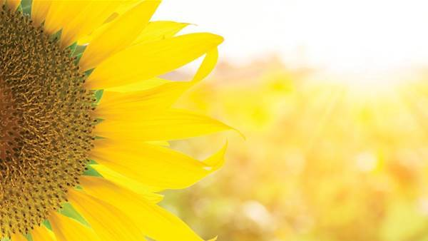 Blooming Good News For Vitamin D!