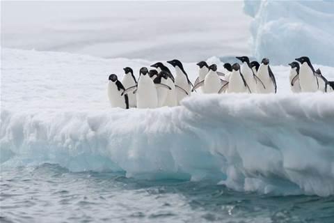 Antarctic division plots storage upgrade