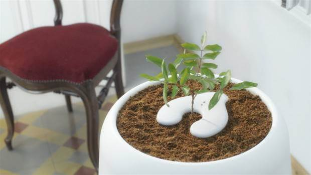 This smart urn grows a tree from the dead