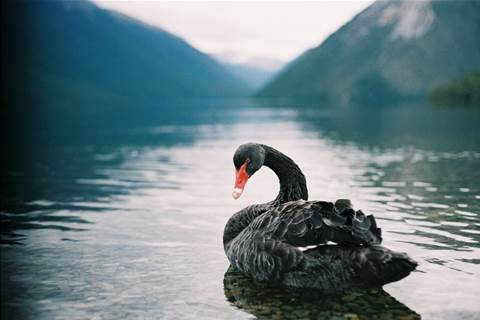 How does government get away from 'black swan' IT projects?