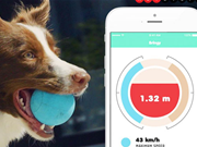 Bringy gives your pooch a futuristic take on fetch