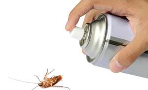 Microsoft launches bug bounty for Office previews