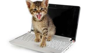 Dell responds to 'cat pee' laptop stink