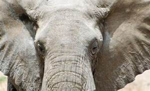 Taronga Zoo quadruples tape storage