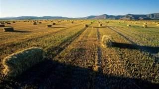 NNN Co seeks $800m network for farm IoT