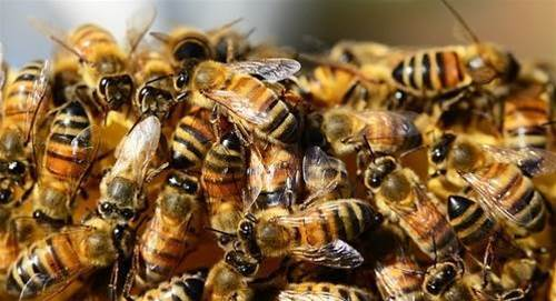 Attack of the cyber-bees: self-learning hivenets to replace botnets in 2018