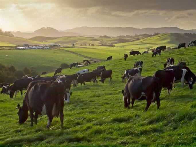 How IoT is gaining momentum in NZ