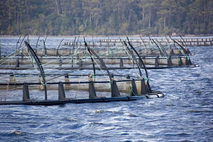 How Tassal created the internet of salmon