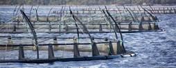 How Tassal created the internet of salmon