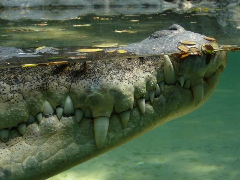 Crocodile network outs troublemakers