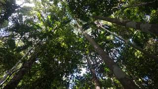 Sunshine Coast Uni to deploy forest sensors