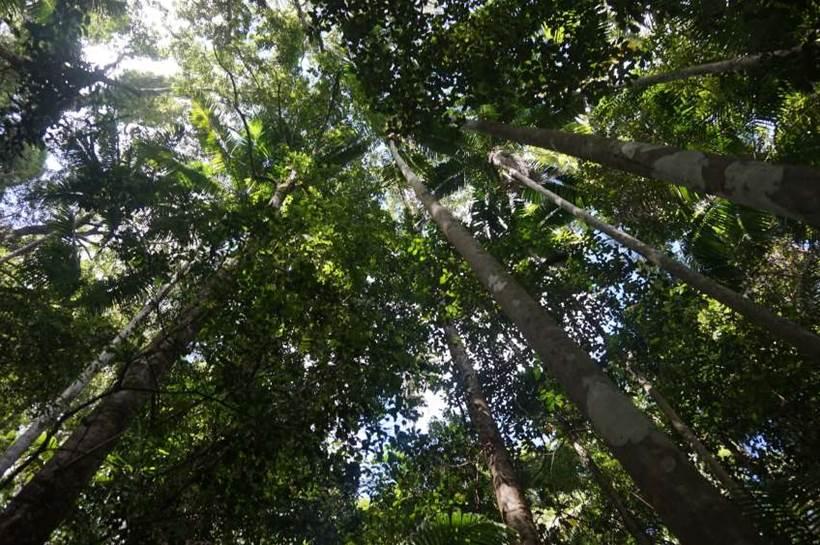 Sunshine Coast Uni to deploy forest sensors
