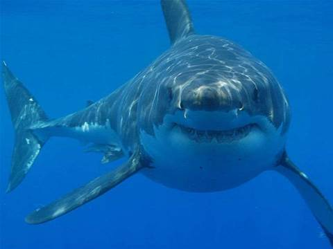 Google to protect undersea internet cables from sharks
