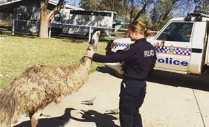 Northern Territory cops get body worn video