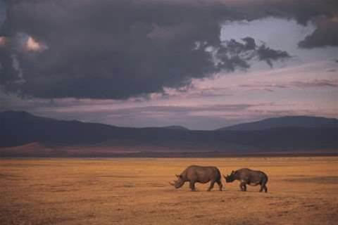 Cisco, DiData track people to protect rhinos