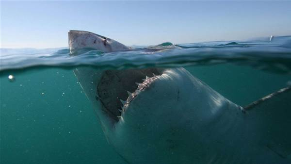 When a Shark Attack happens right in front of you.