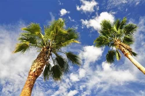 Darwin company opens 'tropical cloud'