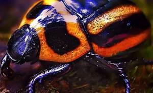 Predictions 2013: Zero Day Initiative on bug bounty programs