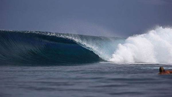 LNP Commits $500,000 to train new surfboard shapers