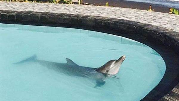 Save Wake Bali Dolphins