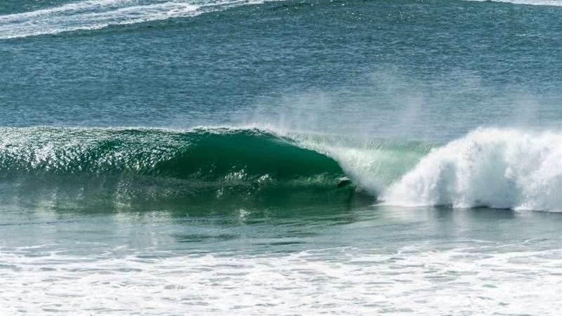 Surfing's Endangered Species