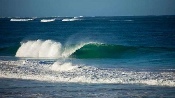 West Coast Shark Activity Starts To Light Up