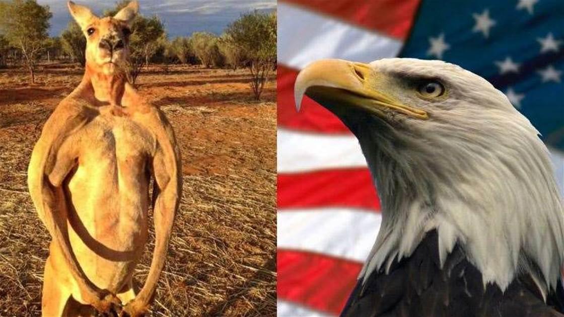 USA vs Australia Rivalry Hots Up At Bells
