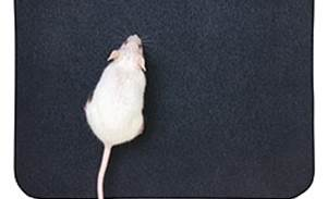 Scientific research is the rat's whiskers