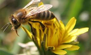 Boffins copy bees to boost web servers