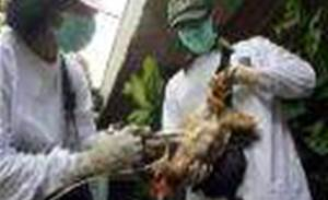 41,000 PCs seek bird flu cure