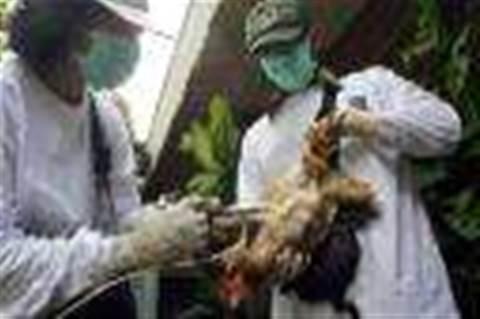 41,000 PCs seek bird flu cure