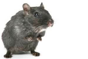 Robots learn from rats' brains