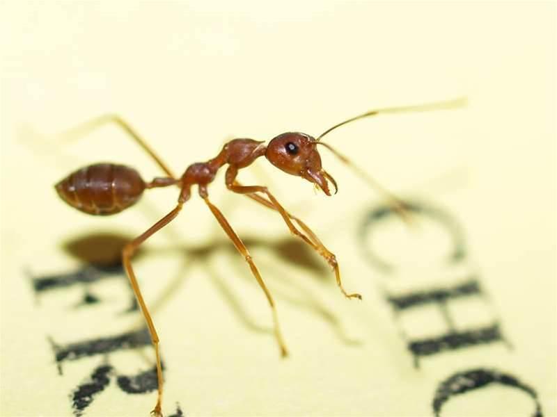 Ants solve dynamic optimisation puzzle
