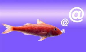 Phishing fraud emails target domain name owners