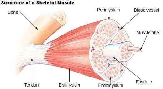 New inkjet prints muscle and bone