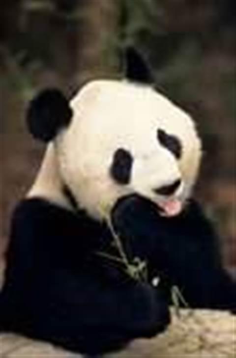 Panda trials Linux anti-virus software