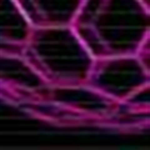 Researchers plug in neural networking nanotubes