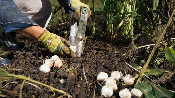 6 Simple Steps To Winterise Your Garden