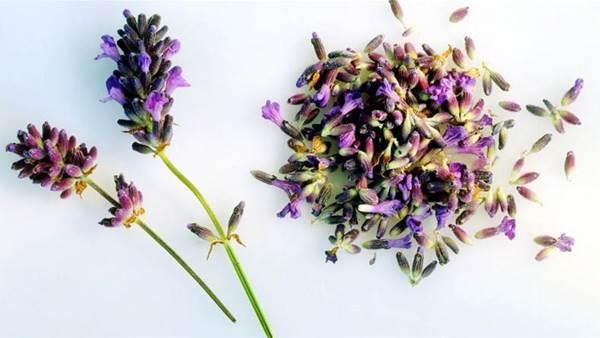 6 genius ways to use lavender