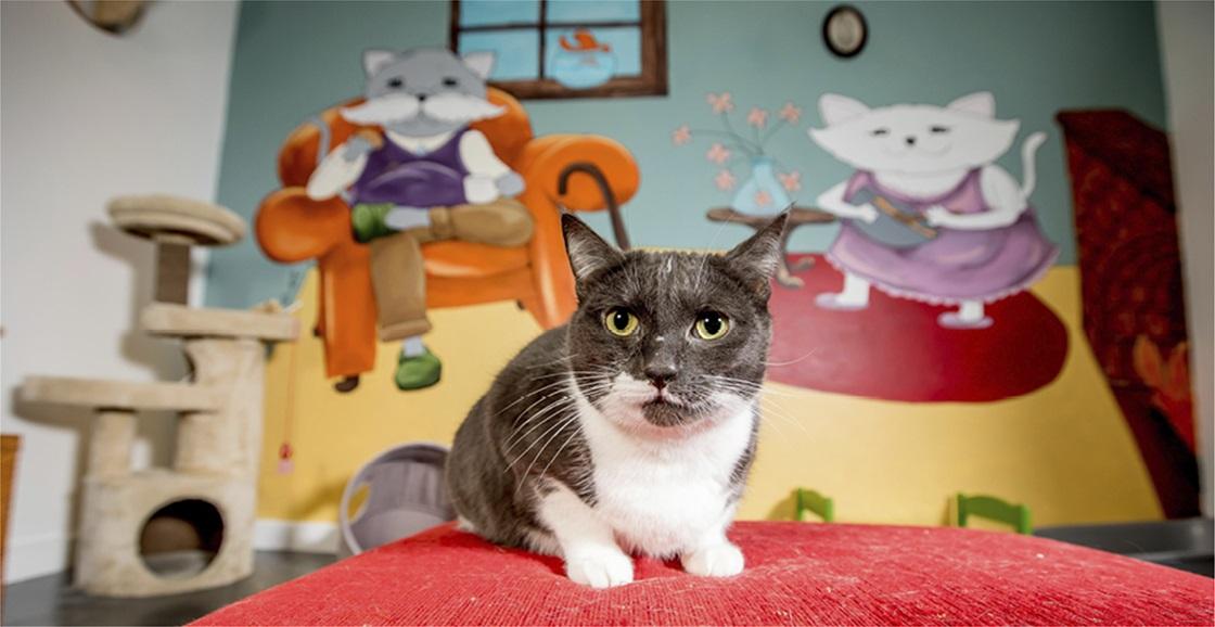 National Pet Adoption Month 2021!