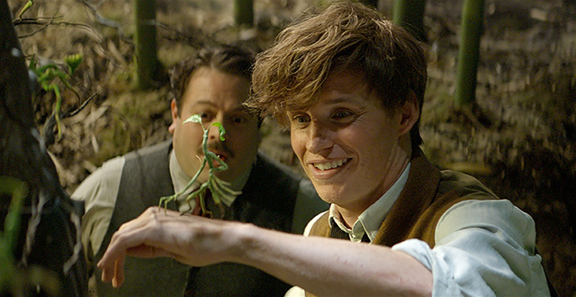 Have you seen Fantastic Beasts and Where to Find Them?